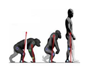 http://www.spacedaily.com/images-lg/evolution-walk-upright-primate-lg.jpg