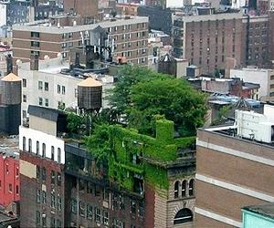 How Does Your Green Roof Garden Grow
