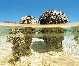 """Résultat de recherche d'images pour """"stromatolithes"""""""