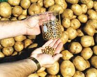food-quantum-tubers-bg.jpg