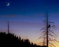Lunar Crescent
